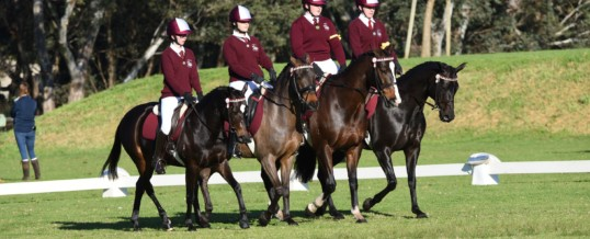 State Dressage Championships 2018 – Thank You!